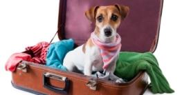 Hund im Flugzeug - Hundeflugbox