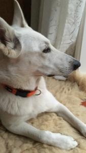 Hundebox für grosse Hunde weiss