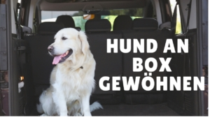 hundebox f r grosse hunde hundetransportbox mehr. Black Bedroom Furniture Sets. Home Design Ideas