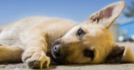 Welpe an Hundebox gewöhnen langsam