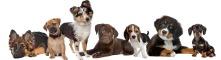 Hundetransportbox Vergleich